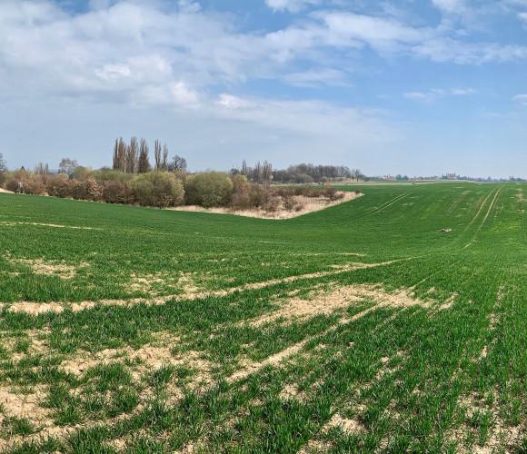 For sale land commercial, 41912 m2 - Vršice, Zásmuky